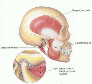 Jaw muscle pain
