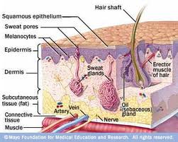 Seborrheic Dermatitis: Causes, Symptoms, and Treatment