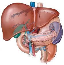 Liver Encephalopathy Liver Encephalopathy