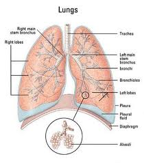 mesothelioma stages Stages of Mesothelioma