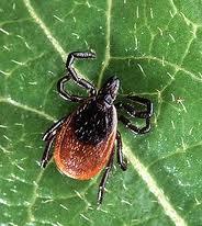lyme disease Lyme Disease